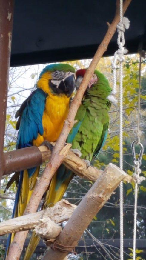 parrot at el paso zoo