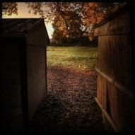 automne_06_011213