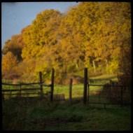automne_09_011213