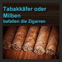 Tabakkäfer oder Milben befallen die Zigarren