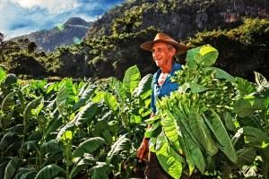 Kuba Tabakplantage Vuelta Abajo