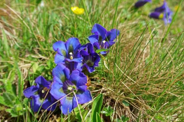 Alpenflora, Teil 3