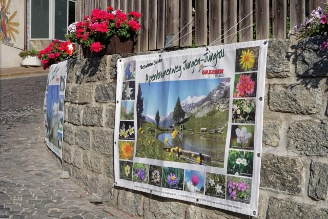 Werbung für den Alpenblumenweg im Jungtal, welchen wir schon bald unter die Füsse nehmen werden