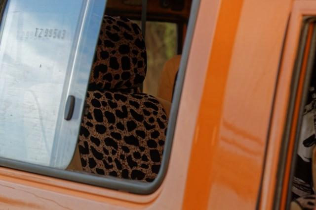 Der einzige Leopard, den wir angetroffen haben