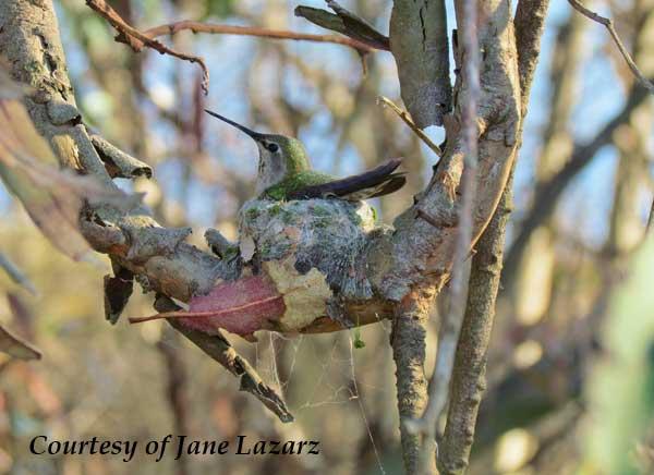 Predators Snakes Hummingbird