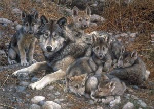 Carl Brenders - Den Mother Wolf Family