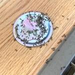 homemade ant killer