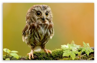 cute_owl-t2