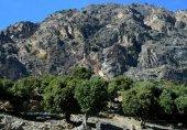 چترال میں پہلی مرتبہ خواتین بھی جنگلات کی رائلٹی میں حصہ دار