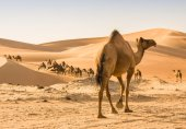 کیا ریت کے اربوں کھربوں ذرے بھی کم پڑ سکتے ہیں!