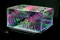 How to Choose a Grow Light | Humus Products