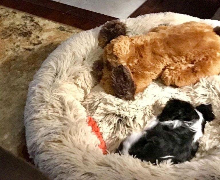 ComfySea™ - Hundebett photo review