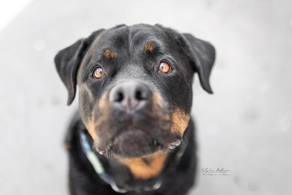 Hundefotografin Mu%CC%88nchen CS No4 MurphyPantufa 1150Web