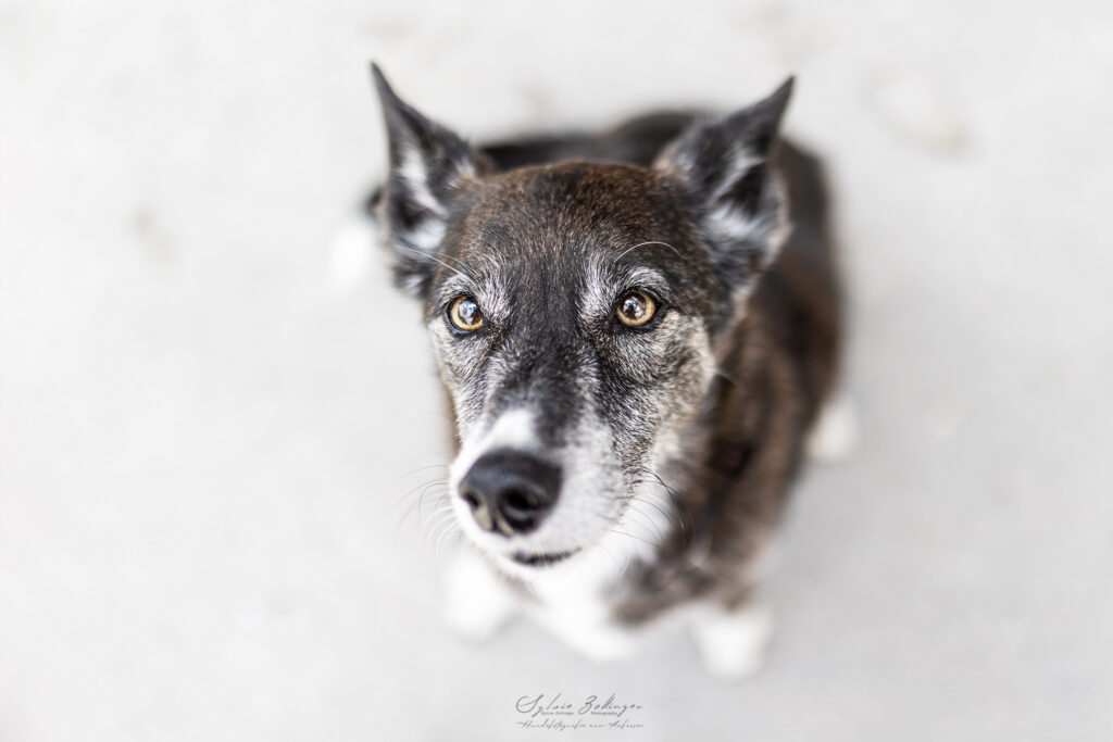 Hundefotografin Mu%CC%88nchen CS No4 MurphyPantufa 1166Web