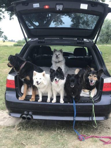 Für Hunde, die gelernt haben, zu warten, ist das kein Problem.