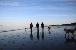 Wanderung am Strand - Hundeschule ohne Leckerlie