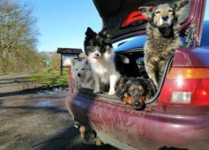 4 Hunde warten im Auto. Nicht Perfekt, aber zuverläßig.