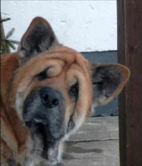 Hundeschule Schwaiger