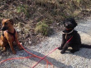 Dogwalker Hundesitter Hundebetreuung Hundebetreuer Hundepension Hundekita HUTA eröffnen selbstständig machen Einblicke in die Arbeit eines Dogwalkers Ausbildung Weiterbildung werden Coaching