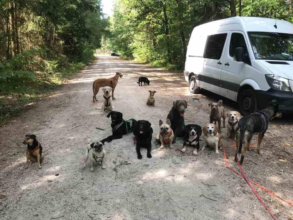 Job Dogwalker Hundesitter Ausbildung FAQ Überlegungen Selbstständigkeit eigene HUTA Hundepension eröffnen Hundekindergarten selbstständig machen Traumjob Hobby zum Beruf machen Hundebetreuer Weiterbildung Hundebetreuung Nürnberg Hundepension Dogwalking Tagesbetreuung Urlaubsbetreuung