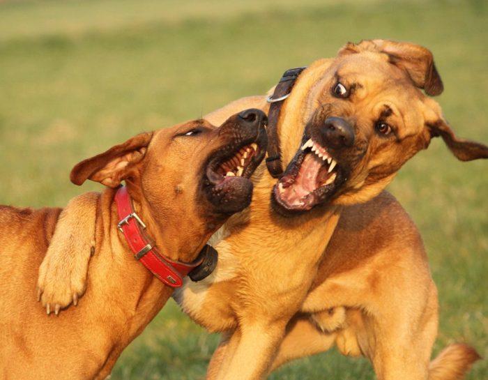 15.&16. Dezember: Die Körpersprache des Hundes lesen und verstehen