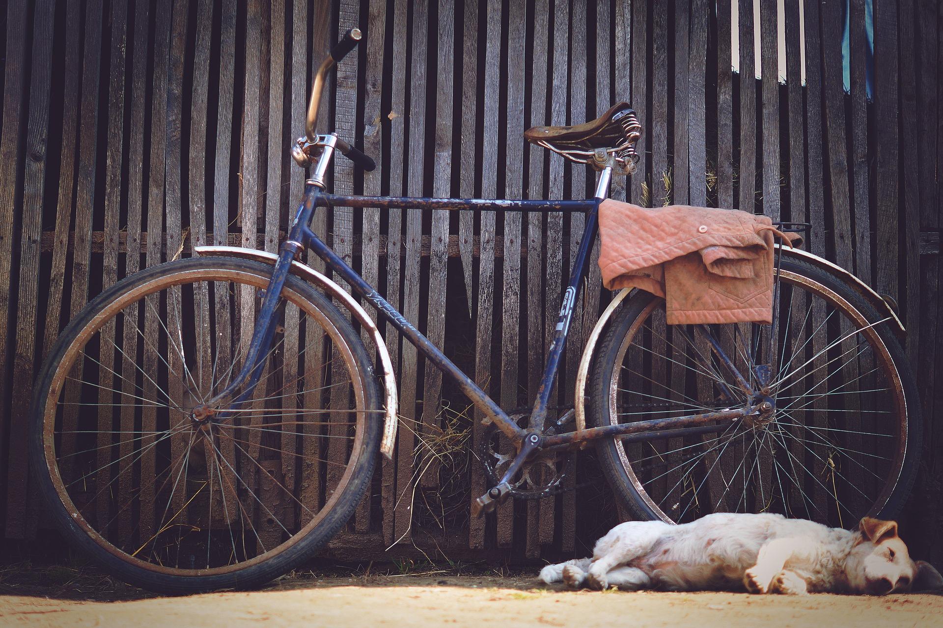 30. & 31. März: Radfahren mit Hund – So geht's richtig