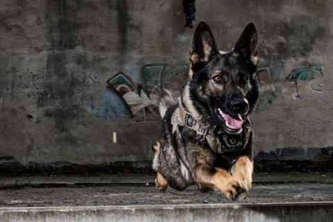 Grym årets polishund