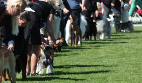 Nordic Dog Show