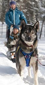 Hundspann i Norge