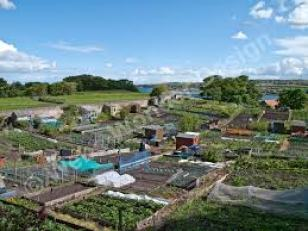Hungerford Arcade Stuart Allotment Article June 2016 (4)