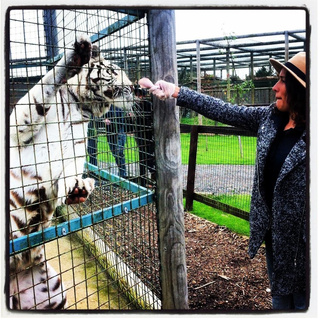 Feeding the Tiger!