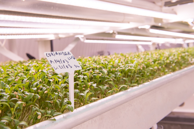 aquaponics salad farm