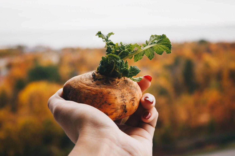 Seasonal September: What to Eat Now