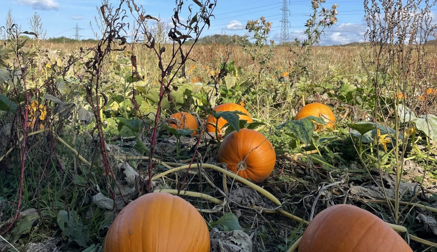 Seasonal October: What To Eat This Month