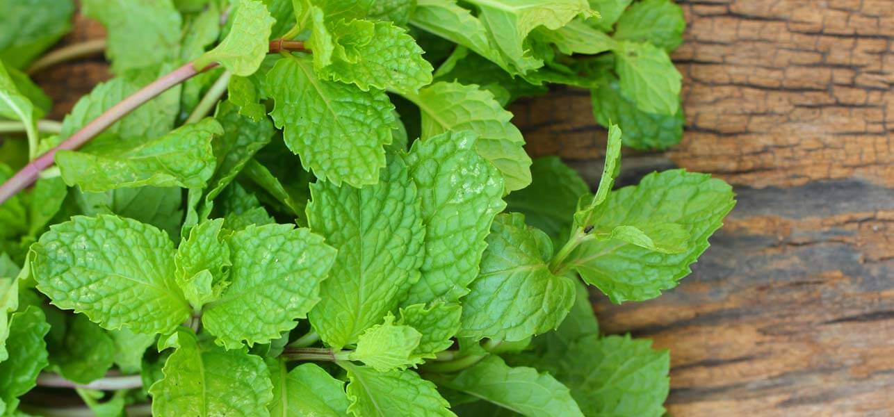 11 Mint Recipes to Try This Summer
