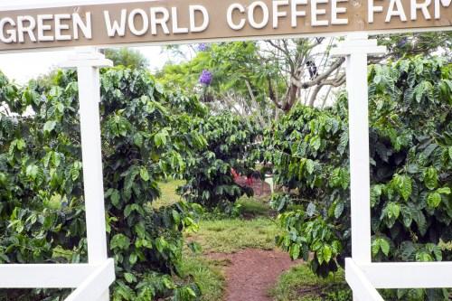 green.world.coffee.6338