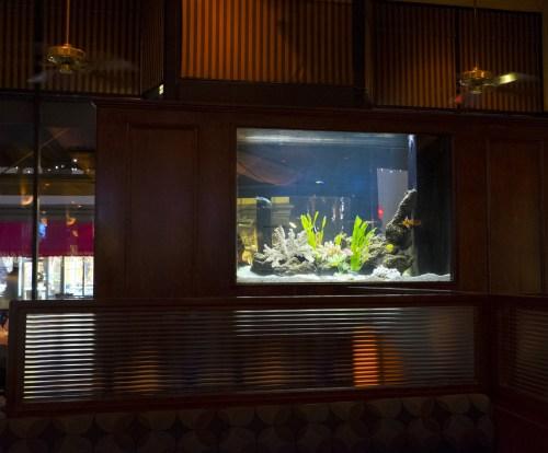 Salt water fish tank.