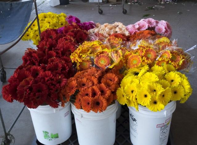carlos.floral.4418