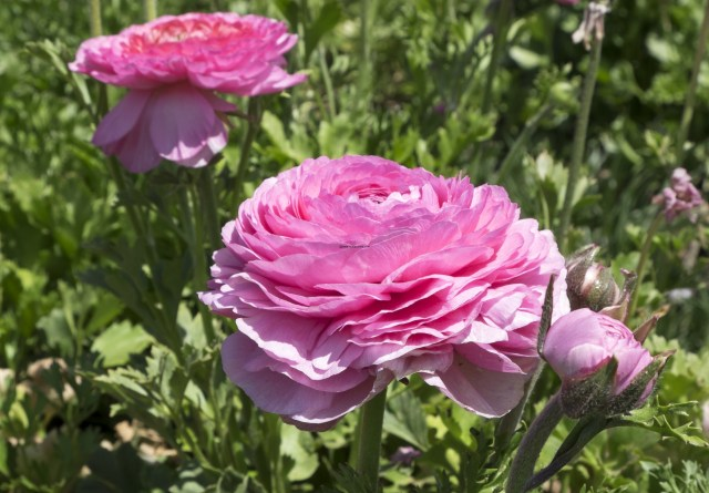 flower.fields.5839