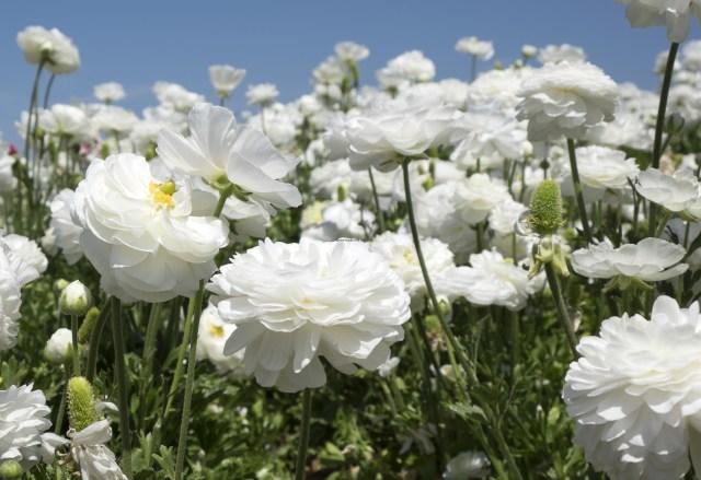 flower.fields.5857