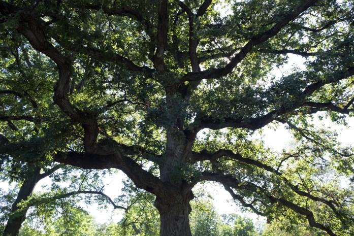 brooklyn-botanical-gardens2925