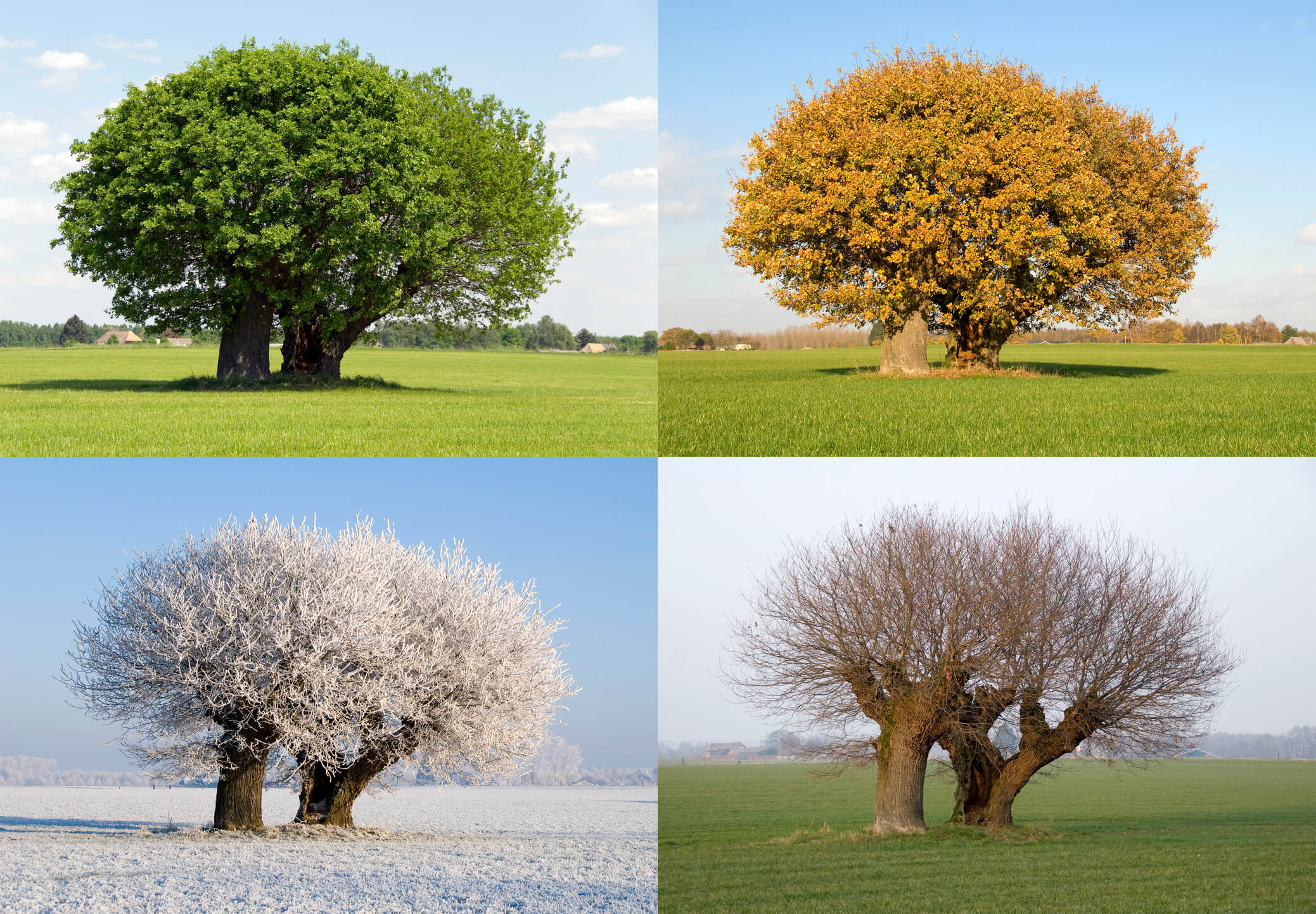 How Seasonal Changes Can Affect Your Body S Metabolism