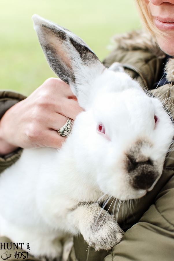 The tale of God's mercy told through Rudy the red eyed rabbit, our Christmas bunny