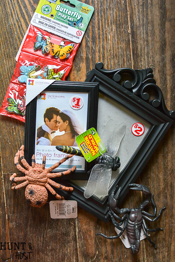 Catch how to make your own DIY gilded bug display case for Halloween with supplies from the dollar store, halloween decorating ideas don't have to be expensive!