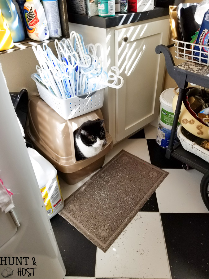 Kitty Litter Storage Bucket Hunt and Host