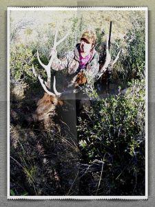 Bull Elk Hunt