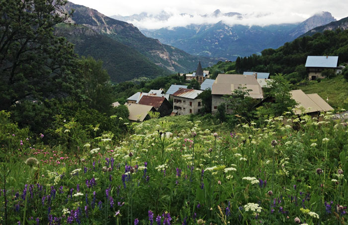 Village-meadow