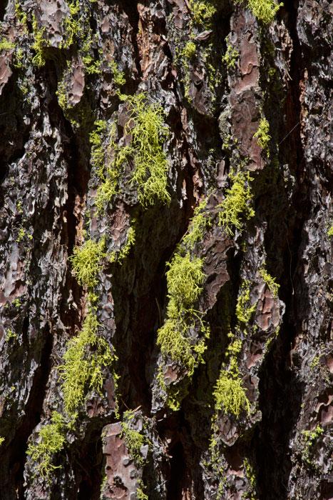 Lichen-&-bark