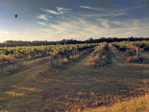 Vineyards with hot air balloon hunter valley