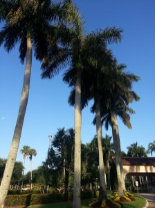 Royal Palms 01